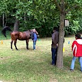 "Seminar ""burn-out prophylaxis"" with horses"